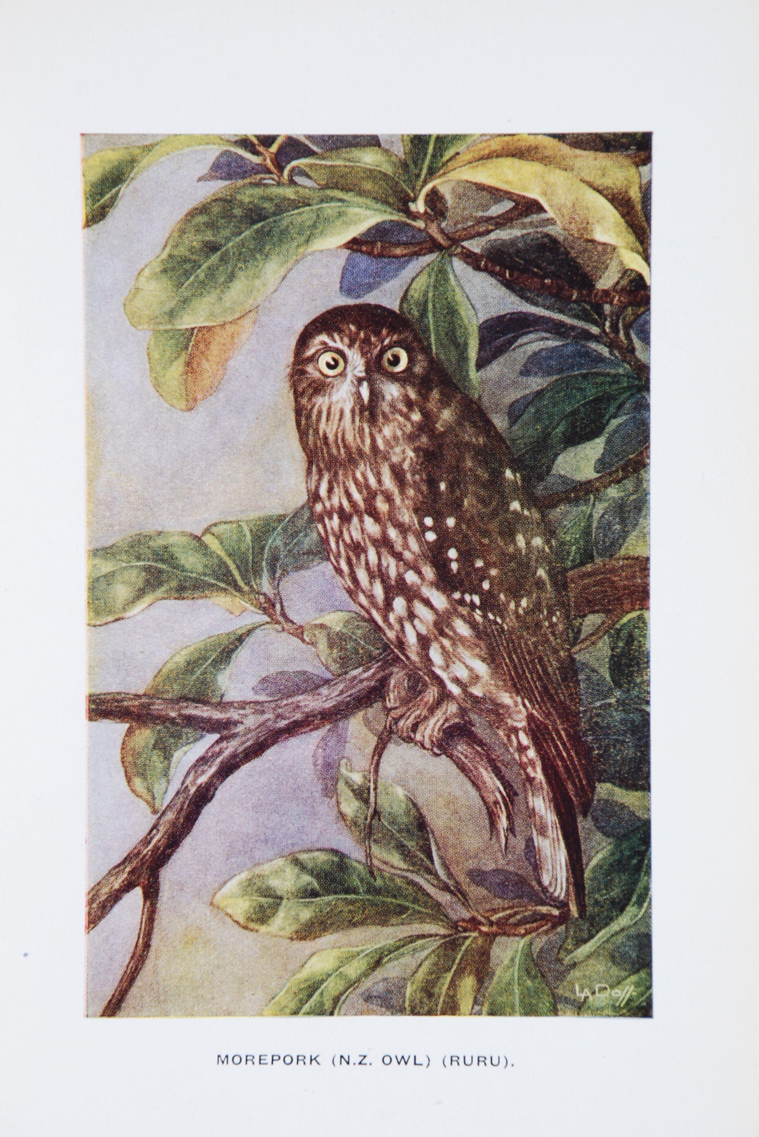 Olga Pauline Burton. Stories of bird and bush. Auckland, N.Z.: Oswald-Sealy (New Zealand), [1943].